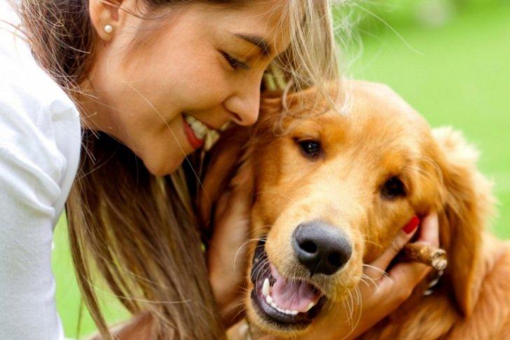 4 cosas que debés hacer si ya no podés cuidar a tu mascota